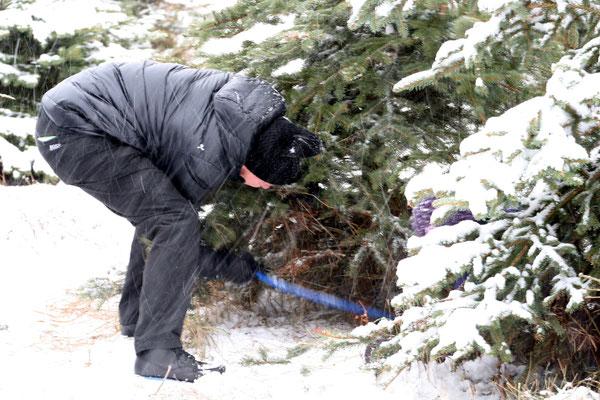 Weihnachtsbaumschlagen,