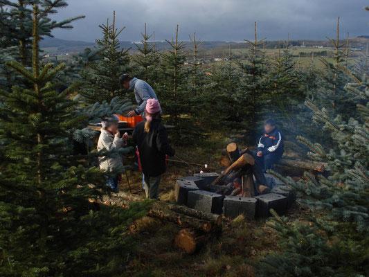 Weihnachtsbaumschlagen, Plantage
