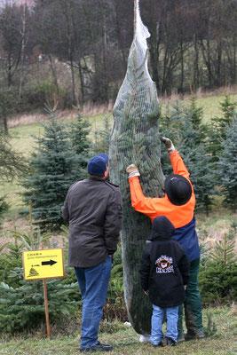 Weihnachtsbaumschlagen, Gut verpackt