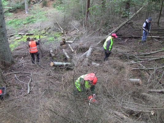 Umweltaktion, Quellenrettung, Kottelbach, Pfälzer Wald, Wasserläufer Projekt