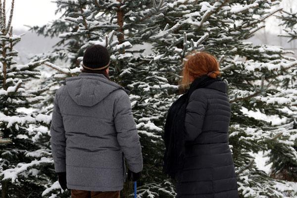 Weihnachtsbaumschlagen, Wer die Wahl hat - hat die Qual