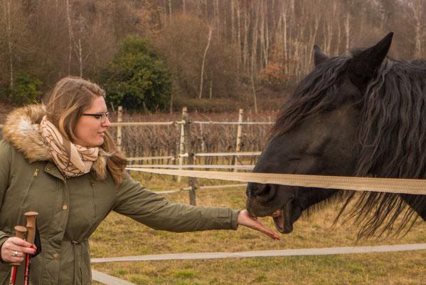 Unterhalb der Burg Landeck werden dann natürlich noch die Pferde gestreichelt.