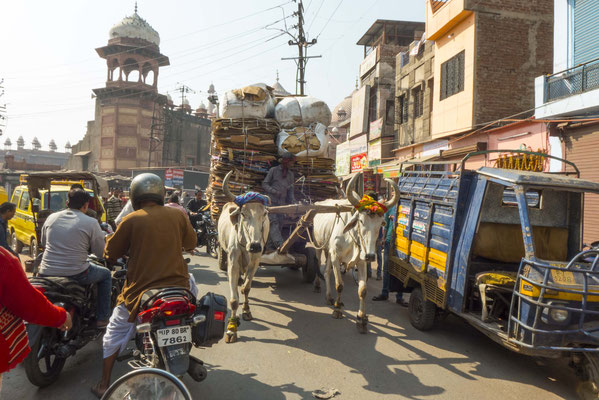 many bikes, cars, cows, tuktuks on the roads,