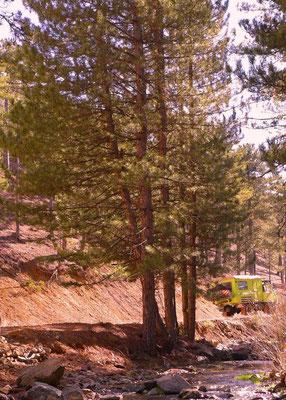 Der Frühling kommt! Zwischen Pamukkale und dem Salda Gölü folgen wir kleinen Waldwegen.