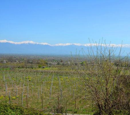 Blick auf den Kaukasus nach dem Aufwachen.