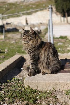 Athener Katzen sind in Anmut und Würde nicht zu übertreffen.