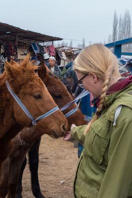 Man kann Fohlen und Pferde kaufen.