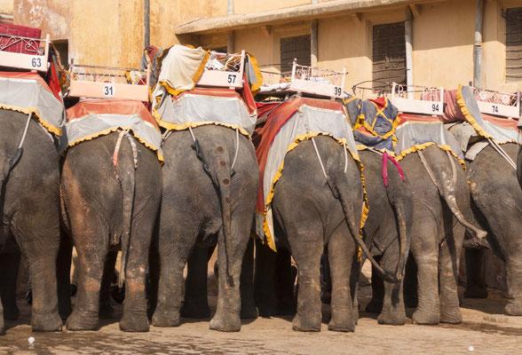 verbringen wir in Jaipur.