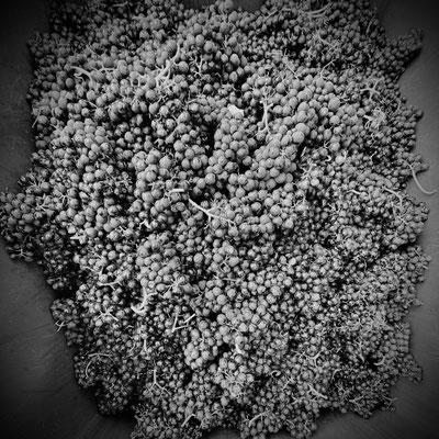 Trauben Schwarz Weiß