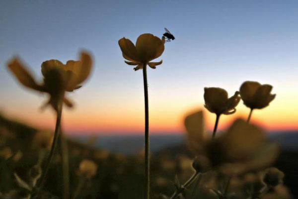 Fliege im Morgenlicht