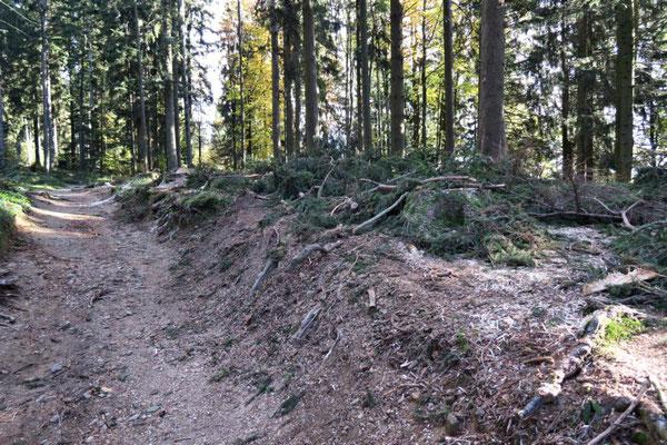 hier wird abgeholzt