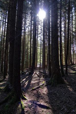 im kühlen Wald
