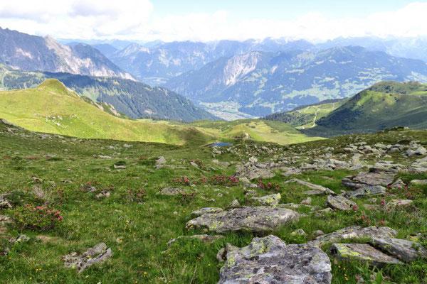Stein- u. Alpenrosenmeer