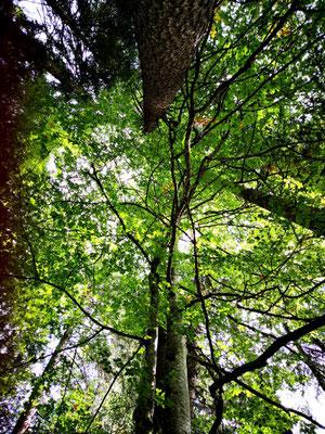 ...aber auch in die Bäume