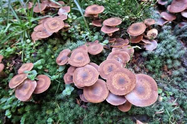 sooo viele Pilze!