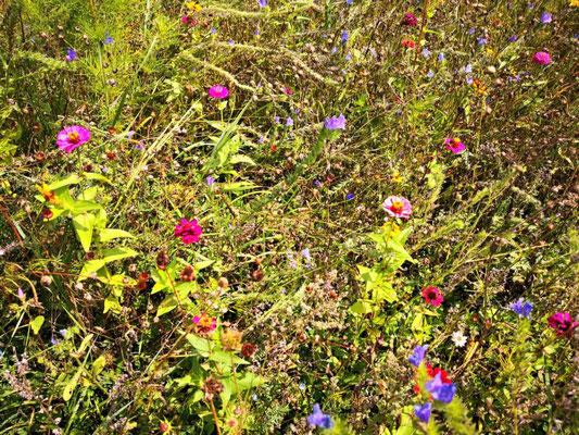 Blumenpracht am Wegesrand