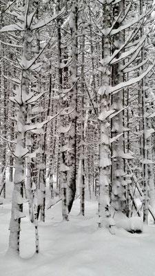 """Bäume tragen """"Stacheln"""""""