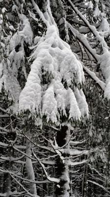 schwer vom Schnee