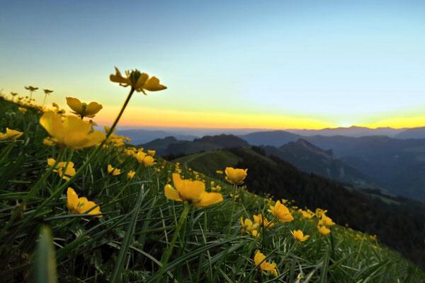 gelb am Himmel, gelbe Blumen