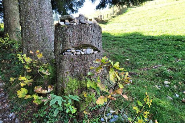 Baumstumpf frisst Steine