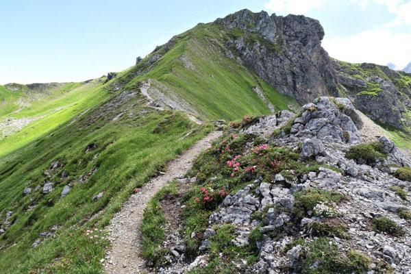 wieder an Alpenrosen vorbei