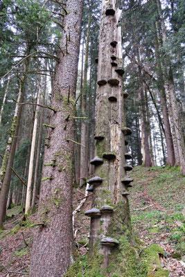 ...mit Schwämmen an den Bäumen