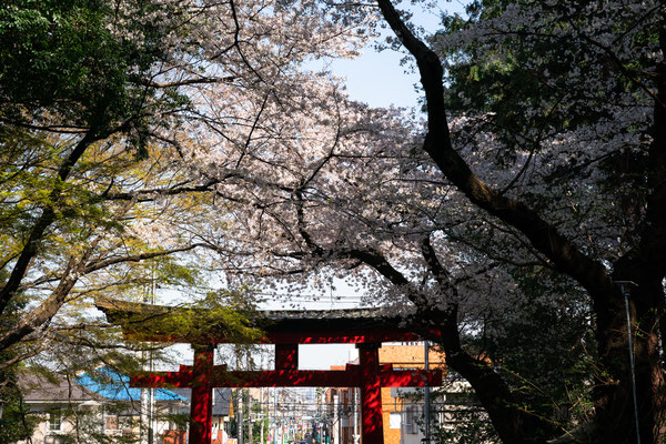 TOKYO(α9II / FE24-70 F2.8GM)