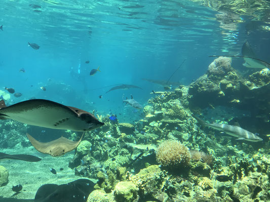 Gold Coast - Sea World Shark Bay トロピカルフィッシュを所狭しと泳いでいます