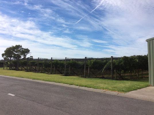 Narkojee Winery - メルボルン郊外には沢山のワイナリーがあります。