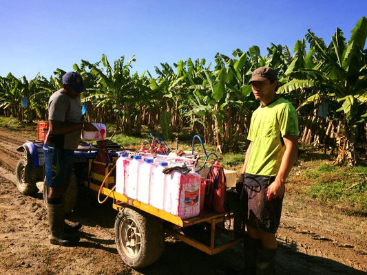Innisfail バナナファーム 消毒の準備 ②