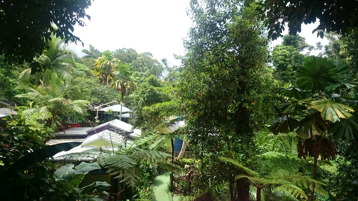 Kuranda - 甘味処 隼から見る景色は最高です