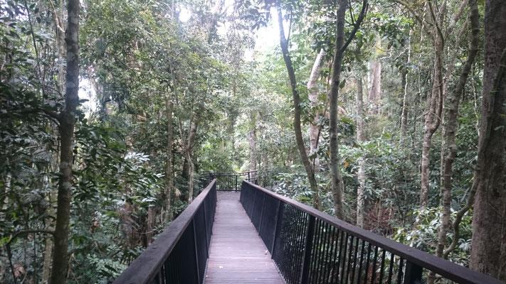 Kuranda - バロン滝に向かう遊歩道 世界最古の熱帯雨林