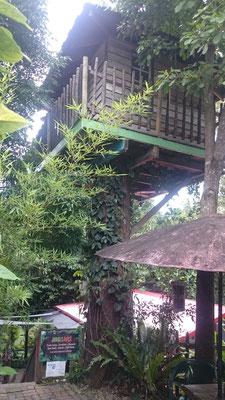 Kuranda - Kuranda Rainforest Marketにあるツリーハウス 最年少記録は5歳の少年が登ったそうです