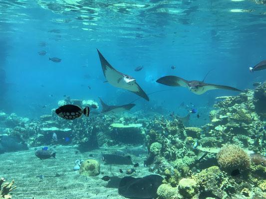 Gold Coast - Sea World Shark Bay たくさんの魚たちがお出迎え