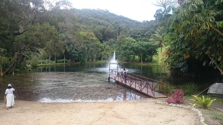 Kuranda - Rainforestation この池にはバラマンディー(アカメ)という魚がたくさんいました