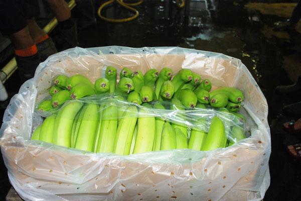 パッキングされたバナナ