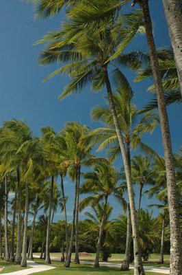 Cairns Esplanede - ケアンズの海沿いの遊歩道