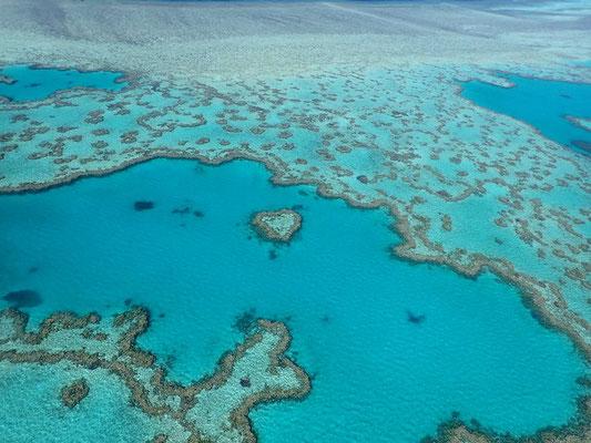 ハートリーフ (Heart Reef)