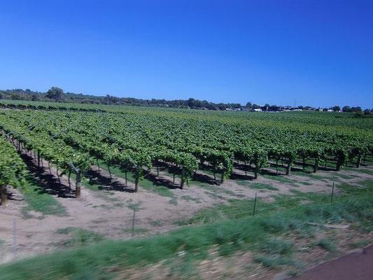 Swan Valley Perth - オーストラリア有名ワイン産地のひとつ【スワンバレー】