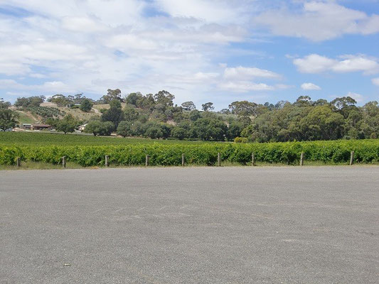 Barossa Valley - ブドウ畑併設。さすが、ワインの産地。