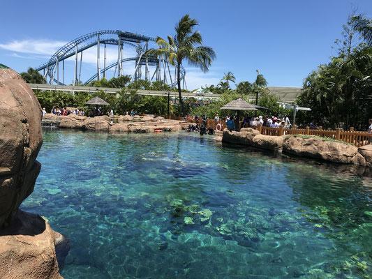 Gold Coast - Sea World Shark Bay 水族館に負けないくらいの大迫力の水槽