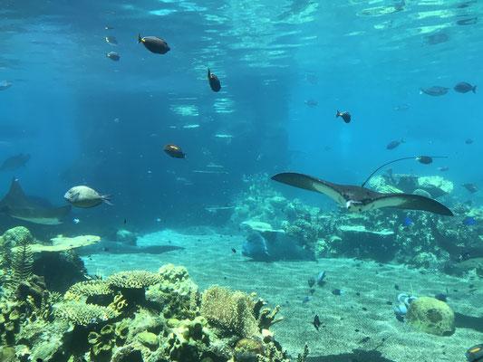Gold Coast - Sea World Shark Bay グレートバリアリーフに住んでいる魚たちを見ることができます