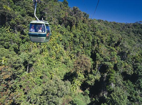 Skyrail - スカイレールから世界遺産にもなっている世界最古の熱帯雨林を見ることができます