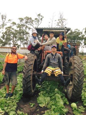 Gatton Rugby Farm - このトラクターに収穫したレタスをのせていきます