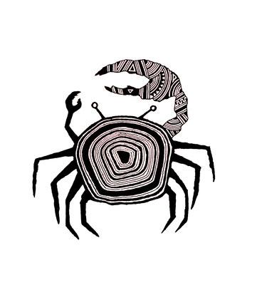 シオマネキ/fiddler crab