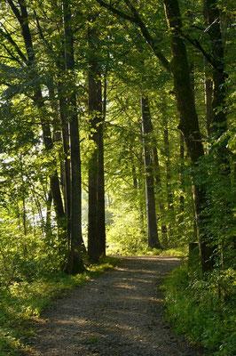 Bei strahlenden Sonnenschein geht es los. Durch grüne Wälder …