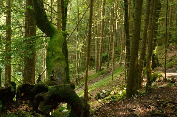 Der Aufstieg schlängelt sich durch urigen Wald