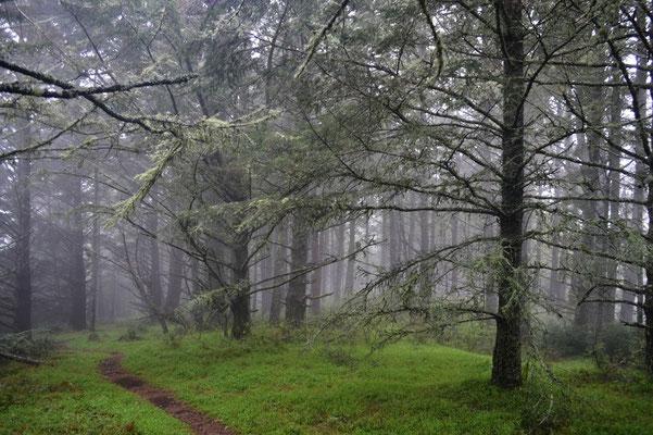 …  Flechten und Nebel überall.