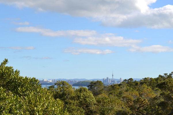 Auckland ist immer in Sichtweite