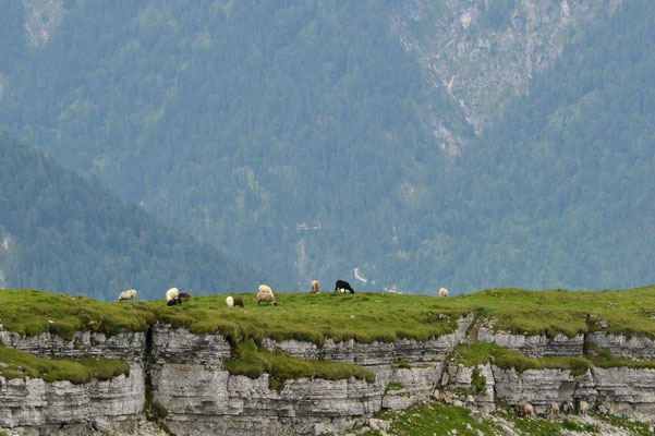 Schafreiter – Woher wohl der Name kommt?